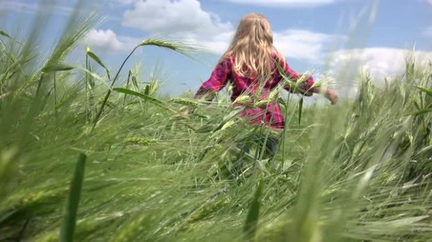 4k-child-little-girl-walking-in-wheat-field-pov-playing-countryside-farming_npwcgpdae__M0004.jpg