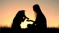human and dog bff